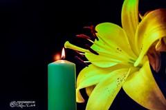 Kerze (stefanendres) Tags: schwarz hintergrund pflanze kerze flamme grün gelb blüte burn brennt eos 760d canon kleinrinderfeld endres stefan