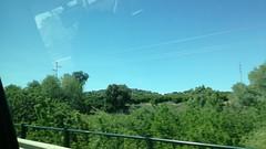 Vegetación fluvial, Peñaflor, Sevilla (Benny de Pino Montano) Tags: vegetación río andalucía españa peñaflor sevilla herbage river spain seville
