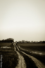 Country road (Peter Szasz) Tags: calm canon canon80d 80d 50mm 50 outside outdoors clear countryside road moody tranquil trees hungary magyarország hajdúbihar hajdu berettyóújfalu sky spring afternoon april nature landscape peaceful path trail tracks walk colorless empty old land grass monochrome blackwhite blackwhitephotos far distance distant away farm ranch house country