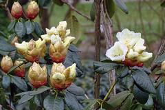 Frühling (Foto Hardy) Tags: flower flora blumen blüten natur frühling nature