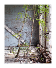 T H R I V E - [CHERNOBYL ZONE] (Andrew Hocking Photography) Tags: pripyat chernobyl ghosttown abandoned derelict old trees birch radioactive sportshall reclaim nature building indoors inside flakeypaint ruin wall sports centre azure exclusionzone