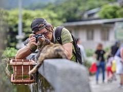 GFX50S__DSF4144_C1 (Bazoka+Cynthia) Tags: cat lori 小婆 新北市 猴硐 瑞芳區 貓 阿偉