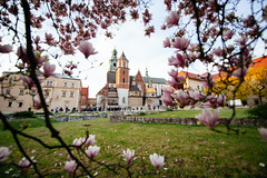 Wawel Through the Blossoms (Javier Pimentel) Tags: polonia castle spring arquitectura flowers cherryblossoms krakow cracow tree katedrawawelska castillodewawel wawelroyalcastle cracovia flores polen architecture castillo poland voivodatodepequeñapolonia