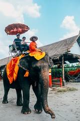 大城,大象 (Eternal-Ray) Tags: fujifilm xt3 xf 1655mmm f28 r lm wr 大城 ayutthaya
