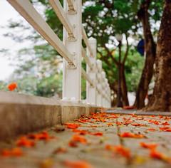 (Hanoi L i f e A r t) Tags: tuanducpham hanoi hanoilifeart vietnam ngc streetlife filmphoto rolleiflex 35f 120mm mediumformat lomo100