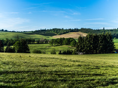 Rolling Hills and Farms (Blue Prince Photography) Tags: farm tree trees field green greenery land growing grow rolling hills rollinghills pnw pacnorwest pacificnorthwest cascadia olympus omd olympusomdem10iii mirrorless