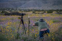 Desert Wildflowers (skram1v) Tags: wild flowers desert plentiful plumbers march2019 fence tower lines canon