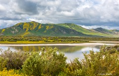 A different look (Photosuze) Tags: carrizoplain california landscape water reflection spring flowers clouds sky hills
