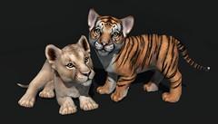 JIAN WIP Tiger & Lion Cubs ([JIAN]) Tags: secondlife mesh animals pets companions jian animated tiger lion cub animal cute