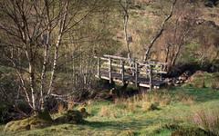 Bridge between Nowhere (ShinyPhotoScotland) Tags: light intimatelandscape enfuse rawtherapee tree birch hdr sonya7r3 deserted empty township village highlandclearances highlands afternoon sunny sunlight landscape scotland morvern hillside braces river bridge aoineadhmor