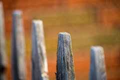 Fence (Eric Tischler) Tags: flickrfriday fence wood bricks