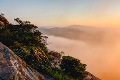 Grandfather Mountain (R. Keith Clontz) Tags: morning mist fog orange colorful springtime hawksbillmountain keithclontz northcarolina linvillegorge jonasridge cliff mosyrocks sandmyrtle grandfather mountain