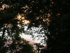 Sky And Tree Branches. (dccradio) Tags: lumberton nc northcarolina robesoncounty outdoor outdoors outside nature natural tree trees branch branches treebranches treelimb treelimbs sunday may evening sundayevening goodevening weekend sky clouds wooded woods landscape canon powershot elph 520hs