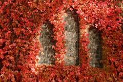 Gostwyck Chapel #2 (adamsgc1) Tags: allsaintsanglicanchurchgostwyck gostwyckchapel chapel gostwyck newsouthwales nsw australia church ivy redivy windows