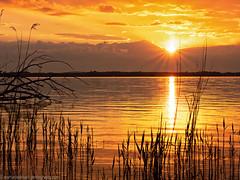 Golden sunset on the Müggelsee (Steppenwolf33) Tags: sunset müggelsee berlin köpenick water lake reed tree