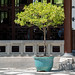 Huntington Library & Botanical Gardens - Pasadena, CA