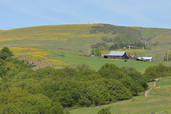 Columbia Hills State Park, Washington (Geographer Dave) Tags: columbiahillsstatepark washington may2019 wildflowers barn homestead