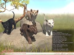JIAN Lion Cub Collection (Belle. May '19) ([JIAN]) Tags: secondlife mesh animals wild lion tiger cub cute pets pet jian companion wanderer