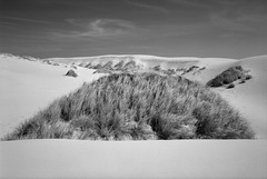 In the Dunes, Oregon Coast (austin granger) Tags: oregon dunes dunegrass mound oregondunes sand coast film gsw690ii sfx