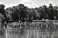 Pensthorpe Natural Park. Norfolk UK (Hidden in the flash.) Tags: blackandwhite bw mono monochrome nikon d3400 landscape pensthorpe norfolk calm water lake