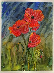 Poppies16 (Pax30091) Tags: watercolour poppies arches aquarelle acuarela acquerello aguarela aquarell inkt serie 水彩画 акварель