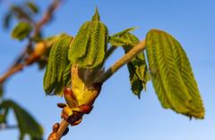 Spring / Весна (dmilokt) Tags: природа nature цветок flower plant сад garden весна spring dmilokt макро macro
