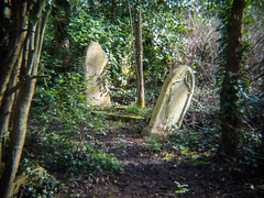 20190302-0169 (www.cjo.info) Tags: 1840 1840s 19thcentury allsaintscemeterynunhead england europe europeanunion holgahlwoplens london m43 m43mount magnificent7 magnificentseven magnificentsevengardencemeteries microfourthirds nunhead olympus olympuspenf southwark unitedkingdom westerneurope blur bokeh carving cemetery climbingplant decay digital flora focusblur foliage gravegraveyard ivy leaf leaning lettering overgrown plant shallowdepthoffield stone stonework tree wooded