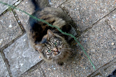 Cat (Pt. 1) (Lysualise) Tags: cat kitty longhaired animals animal amateur canon garden gorgeous beautiful adorable lovely smoosh