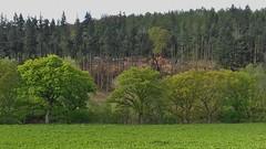 Llangollen Railway 120519_171926 (Leslie Platt) Tags: exposureadjusted straightened cropped denbighshire llangollenrailway deevalley deesidehalt forestry