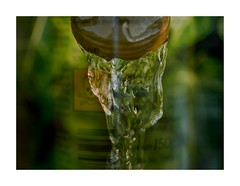 Gardener's Secret (BeMo52) Tags: danger fiveelemts gärtnern gardening garten herbicid macro makro poisson regenwasser tixic wasser water gift doubleexposure