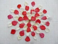 Trifolium Rose (Scagliediterra) Tags: creation creazione art arte composition floreal stilllife naturamorta colors colori composizione petali rosa rose red white