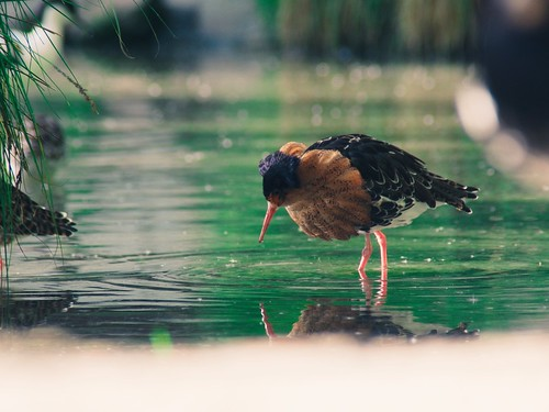 Water Bird Bokeh - 11. Mai 2019 - Schleswig-Holstein - Germany