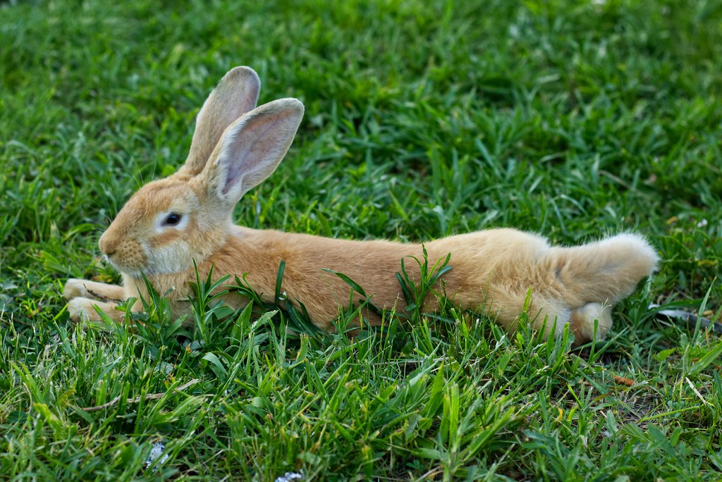 The World S Best Photos Of Animal And Rabbit Flickr Hive Mind