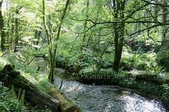 Tintern Wood (Ken Meegan) Tags: tinternwood tinternabbey saltmills cowexford ireland 552019 wood stream trees tinterntrails