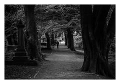 FILM - General Cemetery (fishyfish_arcade) Tags: 35mm analogphotography bw blackwhite blackandwhite canonsureshotz135 filmphotography filmisnotdead hp5 istillshootfilm monochrome analogcamera compact film ilford mono generalcemetery sheffield