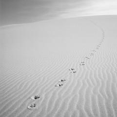Proof of Life (Aaron Bieleck) Tags: 500cm hasselblad film hasselblad500cm 120film analog 6x6 square filmisnotdead mediumformat wlvf tracks sanddune oregon pnw pacificnorthwest sand outdoors 60mmct johndellenbeckdunes