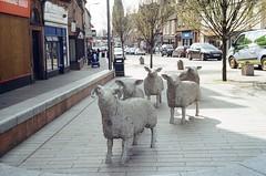 Stony Sheep (bigalid) Tags: film 35mm ricoh rz728 lomography100cn 100iso c41 april 2019 lockerbie statue