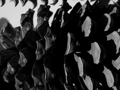 mull of galloway logan botanic garden-4131552 (E.........'s Diary) Tags: eddie ross olympus omd em5 mark ii spring 2019 logan botanic garden dumries galloway mull mono black white plants botanics