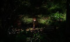 Home alone. Fox cub. (mond.raymond1904) Tags: fox dodder cub shade dublin