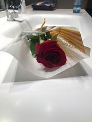 Rose for Feast of Sant Jordi (JenGallardo) Tags: spain españa vacation vacay holiday barcelona bcn catalonia catalunya santjordi