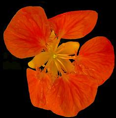 FLOR (Joan Biarnés) Tags: flor macro centenys pladelestany girona 314 panasonicfz1000