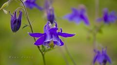 pequeños mundos III _DSC6321 (Rodo López. Fotero... instantes en un clic) Tags: flores flickr flower floresdecastillayleon floresdeespaña floresdeleón flor nikon naturaleza nature naturalezacautivadora nostalgia naturebynikon spain sentimientos