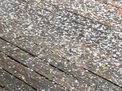 May 6, 2019 - Small hail accumulates in Thornton. (LE Worley)