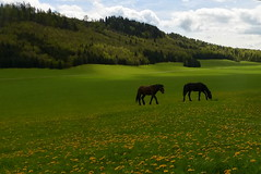 Idyll (tatranka7) Tags: landscape animals green idyll atmosphere spring