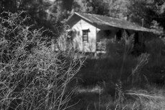 House in a Field (PositiveAboutNegatives) Tags: leica slr leicaflexsl vintagecamera leicaflex leicar leitz 35mm 35mmelmarit film analog foma fomapan fomapan100 kodak hc110 dilutionb coolscan florida cottage house abandoned empty deserted homestead