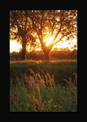 Sunset (MC--80) Tags: sunset