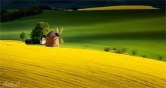 Tuscan Moravia, Czechia (AdelheidS Photography) Tags: chvalkovice southmoravianregion czechrepublic adelheidsphotography adelheidsmitt adelheidspictures czechia moravia windmill canola spring landscape brassica