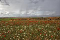 Sierra de Armantes (Fernando Forniés Gracia) Tags: españa aragón zaragoza calatayud ateca sierradearmantes paisaje landscape naturaleza nubes cielo amapolas ababoles margaritas