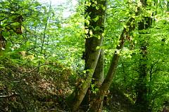 Squirrel @ Châtillon-sur-Cluses @ Hike to Mont Orchez (*_*) Tags: hiking mountain montagne nature randonnee walk marche printemps spring 2019 may afternoon europe france hautesavoie 74 cluses savoie animal squirrel ecureuil
