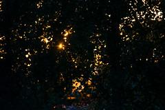 Last rays. (Azariel01) Tags: 2019 belgique belgium brussels bruxelles coucherdesoleil sunset leaves feuilles trees arbres rayons rays sunbeam